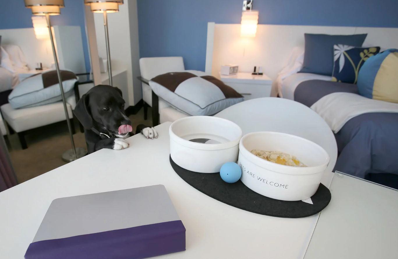 Pet Hotels The Ultimate Niche By Stuart Pallister