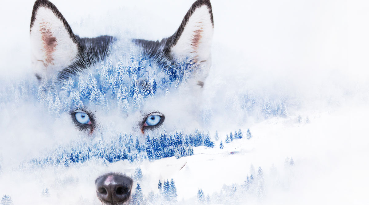 Is the wolf scratching at the door? Lessons learned so far from the COVID era...