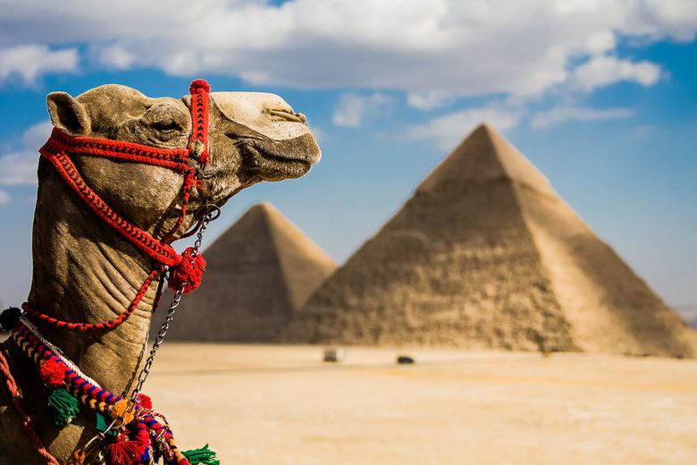Brands Race to Sure Up Footprints in Egypt, Where Tourism is Booming [INFOGRAPHIC]