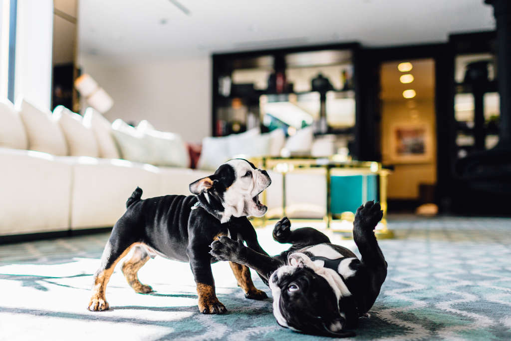 Puppy Overload: The London West Hollywood Welcomes Its New