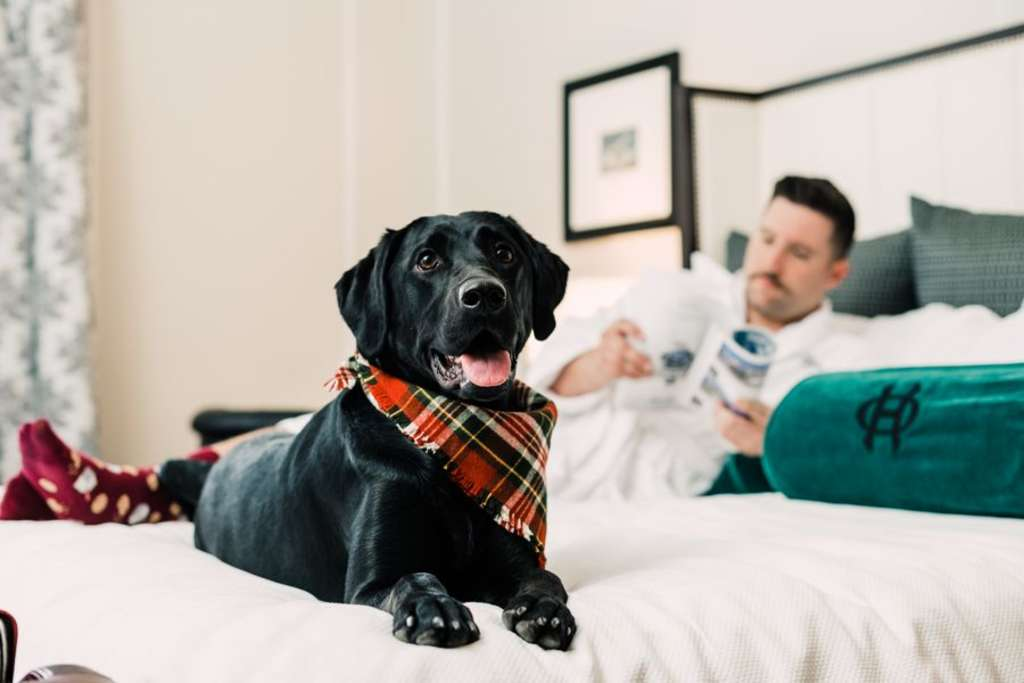 Top Pet Friendly Hotels Around the World